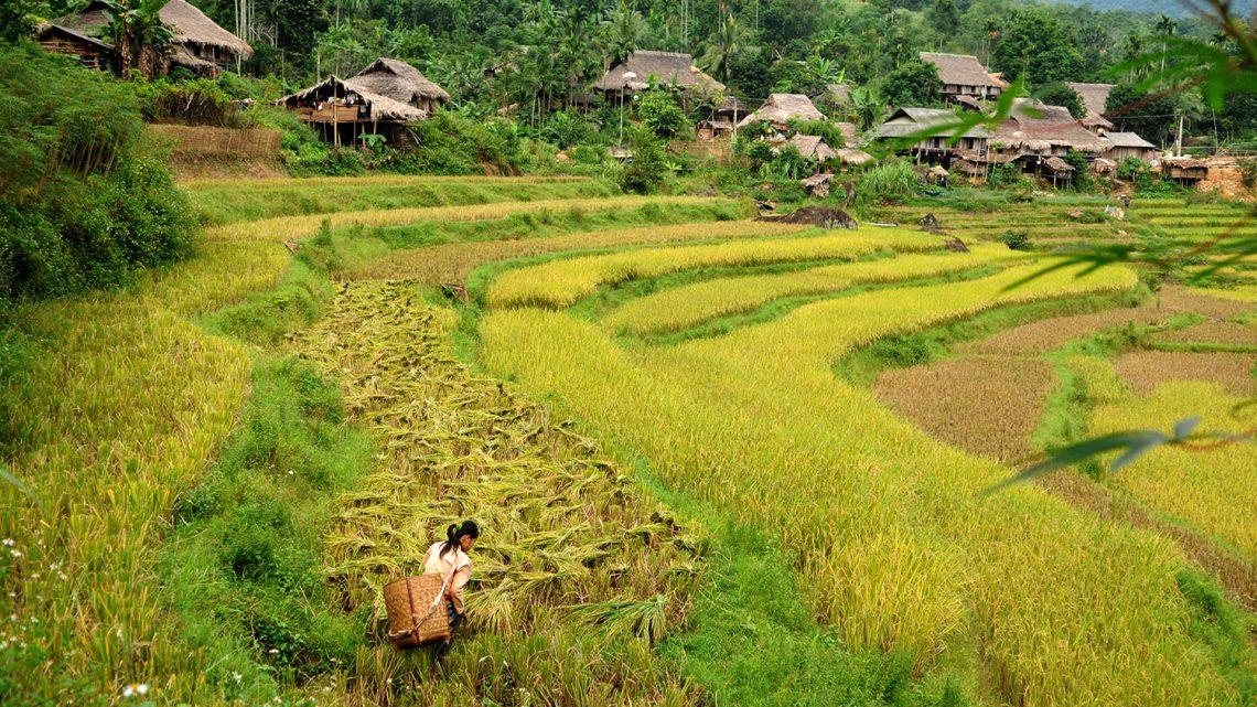4 bonnes raisons de voyager au Vietnam