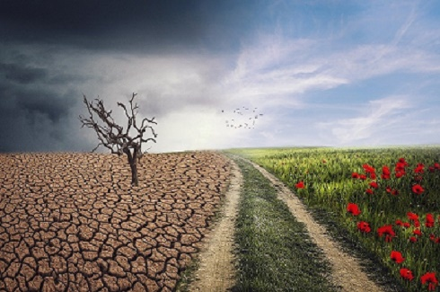3 solutions pour faire face au changement climatique