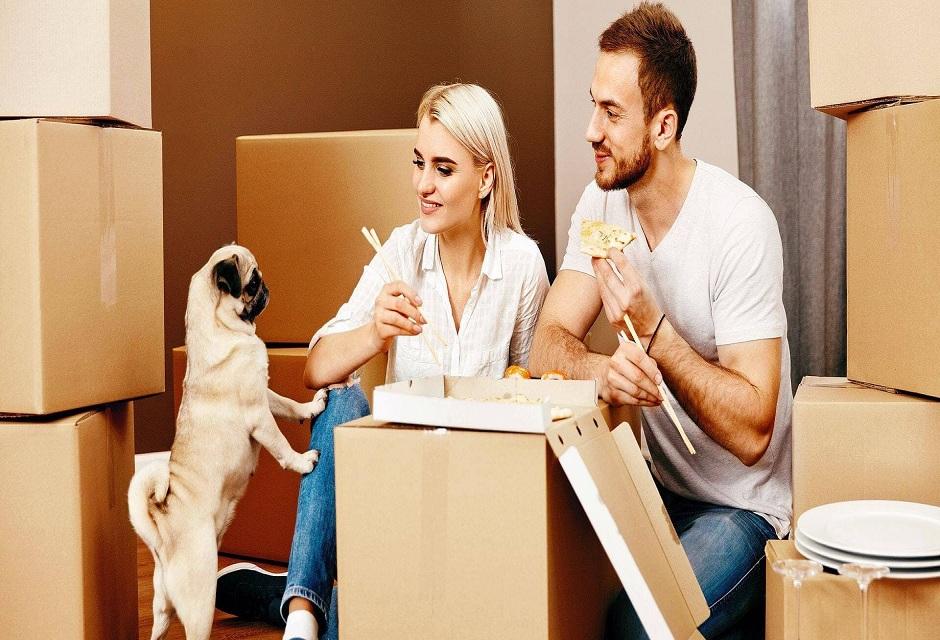 Animaux de compagnie : comment organiser le déménagement ?