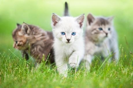 Les différences entre un chat adulte et un chat senior